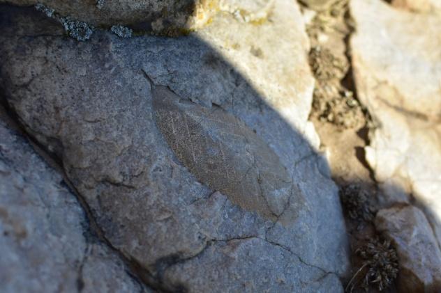 Конкурс палеонтологических находок